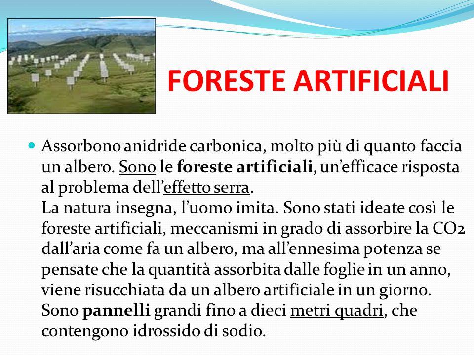 FORESTE ARTIFICIALI Assorbono anidride carbonica, molto più di quanto faccia un albero. Sono le foreste artificiali, un'efficace risposta al problema