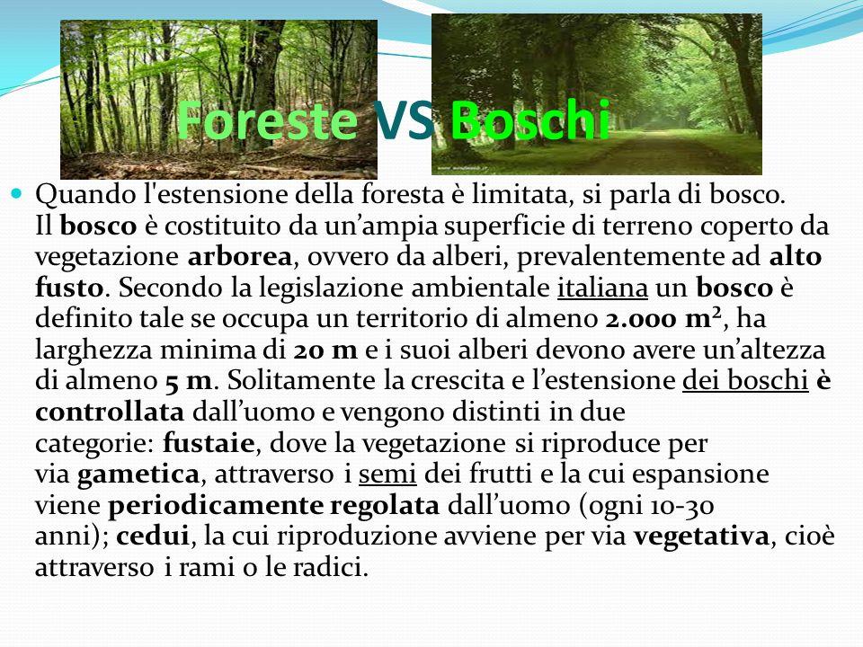 Foreste VS Boschi Quando l'estensione della foresta è limitata, si parla di bosco. Il bosco è costituito da un'ampia superficie di terreno coperto da
