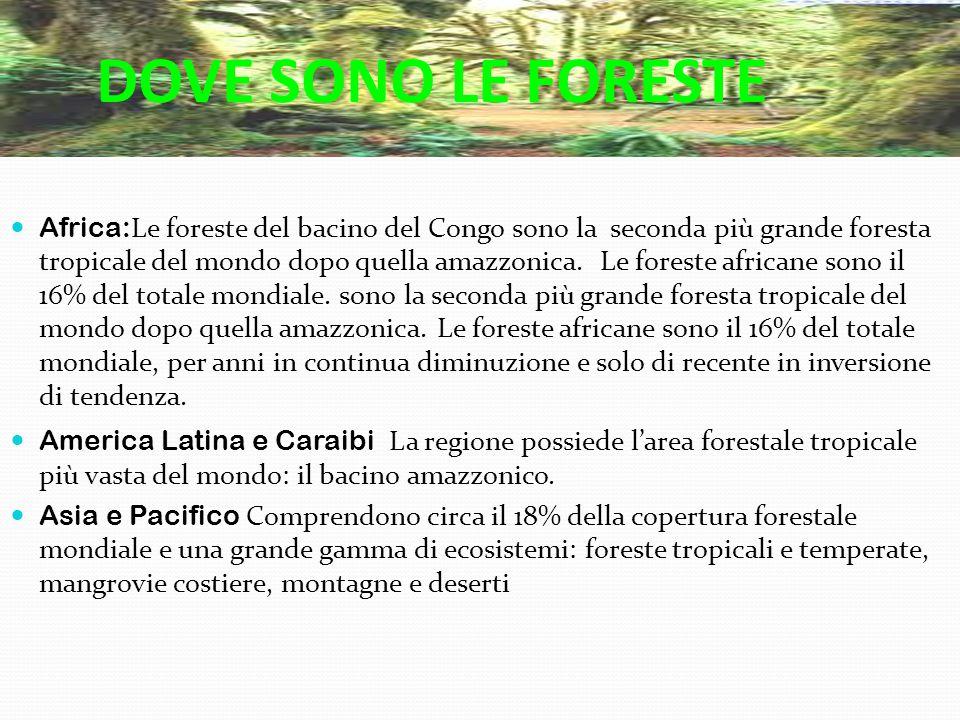 DOVE SONO LE FORESTE Africa: Le foreste del bacino del Congo sono la seconda più grande foresta tropicale del mondo dopo quella amazzonica. Le foreste
