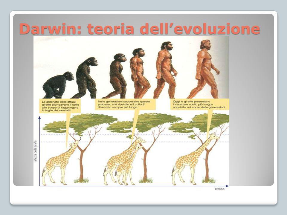 Darwin: teoria dell'evoluzione