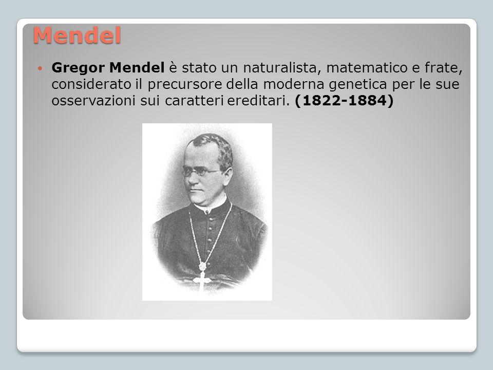 Mendel Gregor Mendel è stato un naturalista, matematico e frate, considerato il precursore della moderna genetica per le sue osservazioni sui caratter