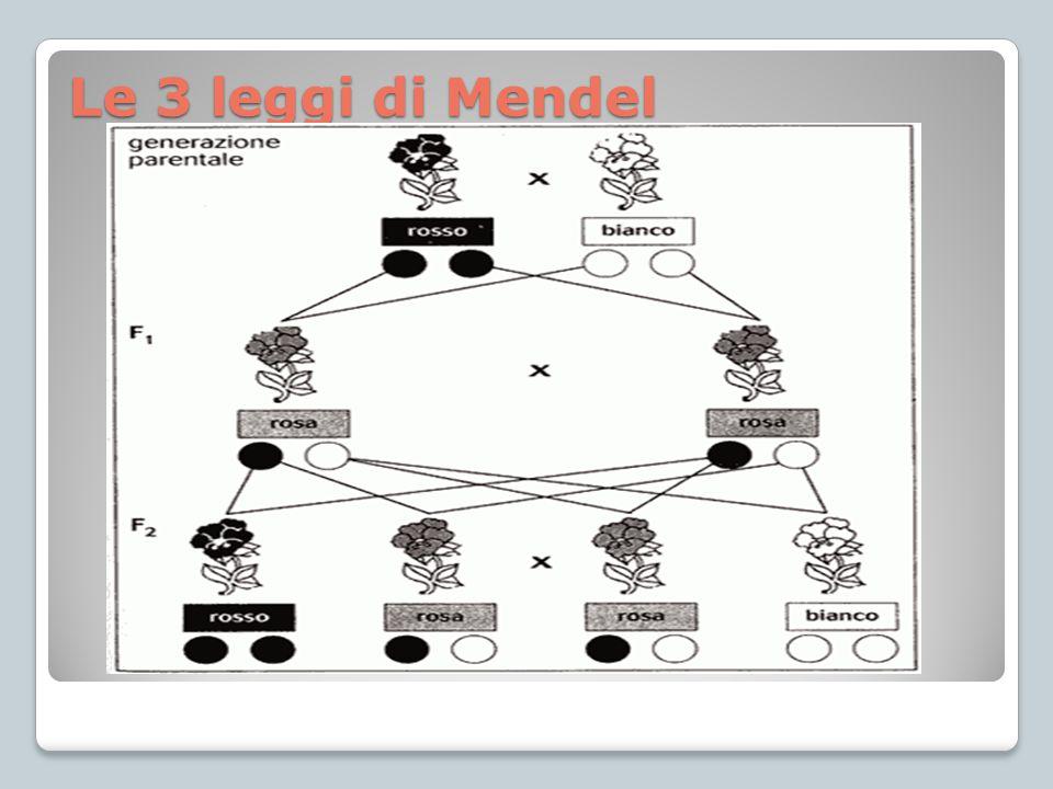 Le 3 leggi di Mendel