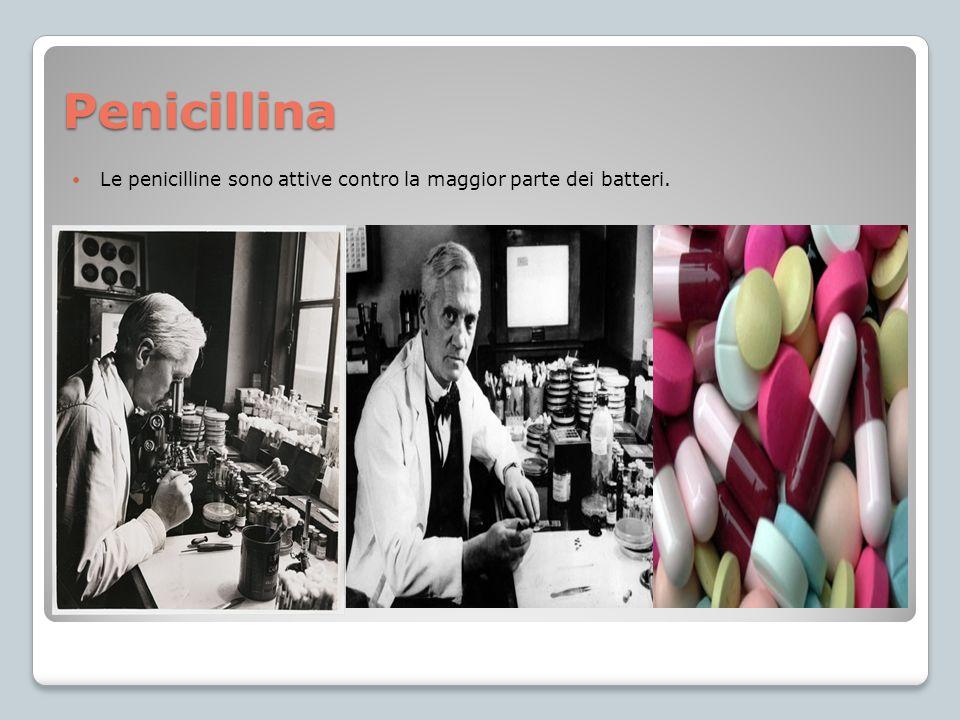 Penicillina Le penicilline sono attive contro la maggior parte dei batteri.