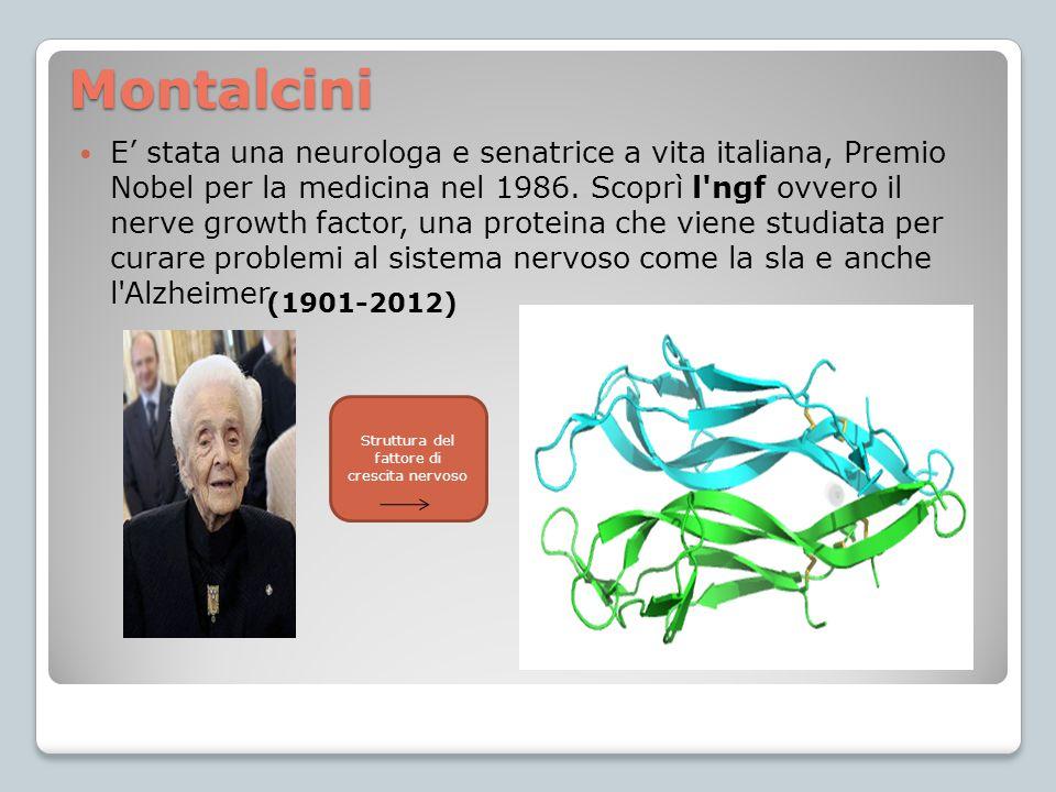 Montalcini E' stata una neurologa e senatrice a vita italiana, Premio Nobel per la medicina nel 1986. Scoprì l'ngf ovvero il nerve growth factor, una