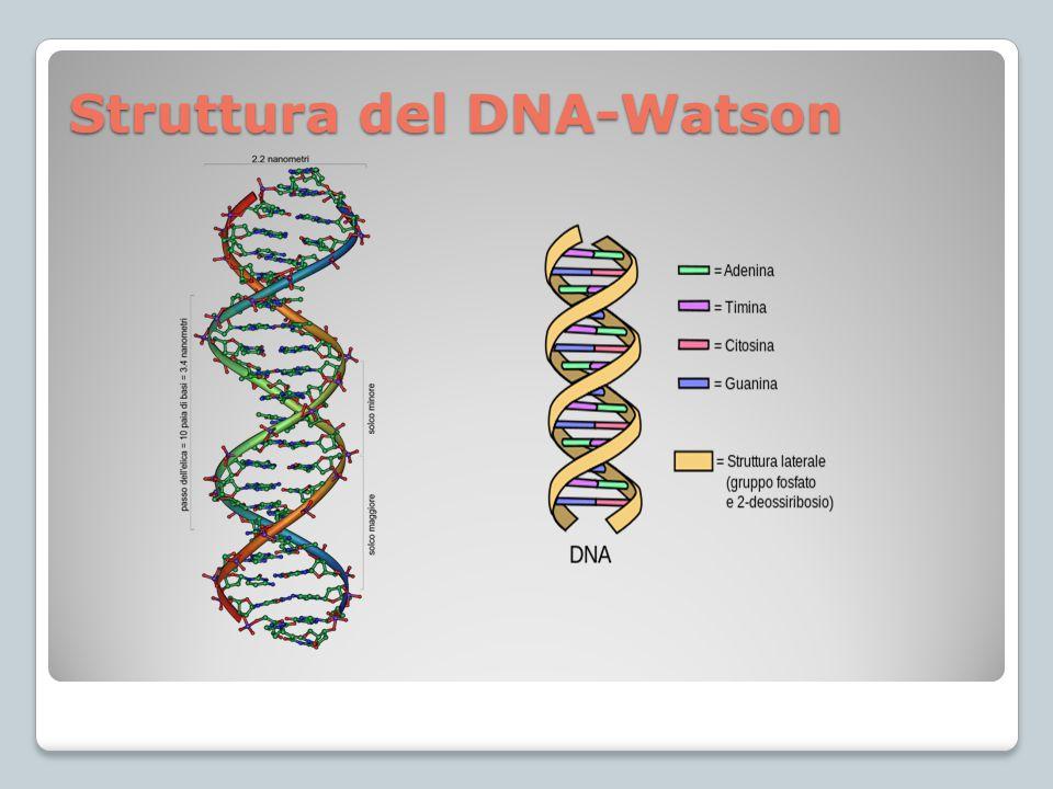 Struttura del DNA-Watson