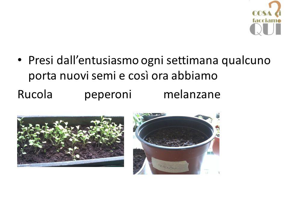 Presi dall'entusiasmo ogni settimana qualcuno porta nuovi semi e così ora abbiamo Rucola peperoni melanzane