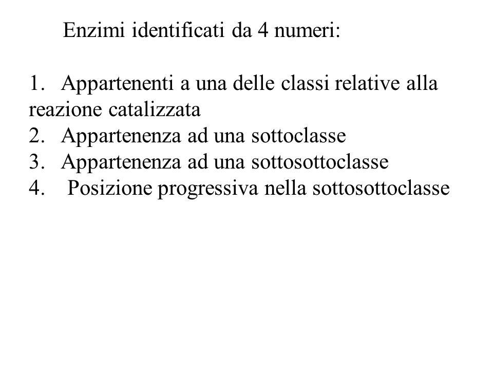 Enzimi identificati da 4 numeri: 1. Appartenenti a una delle classi relative alla reazione catalizzata 2. Appartenenza ad una sottoclasse 3. Appartene