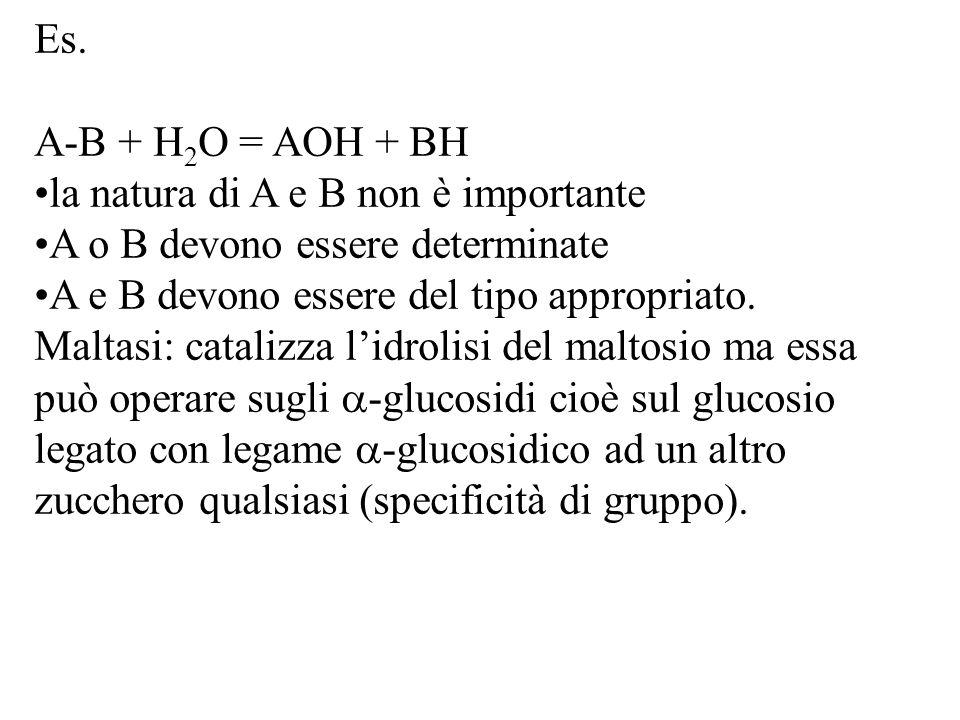 Es. A-B + H 2 O = AOH + BH la natura di A e B non è importante A o B devono essere determinate A e B devono essere del tipo appropriato. Maltasi: cata
