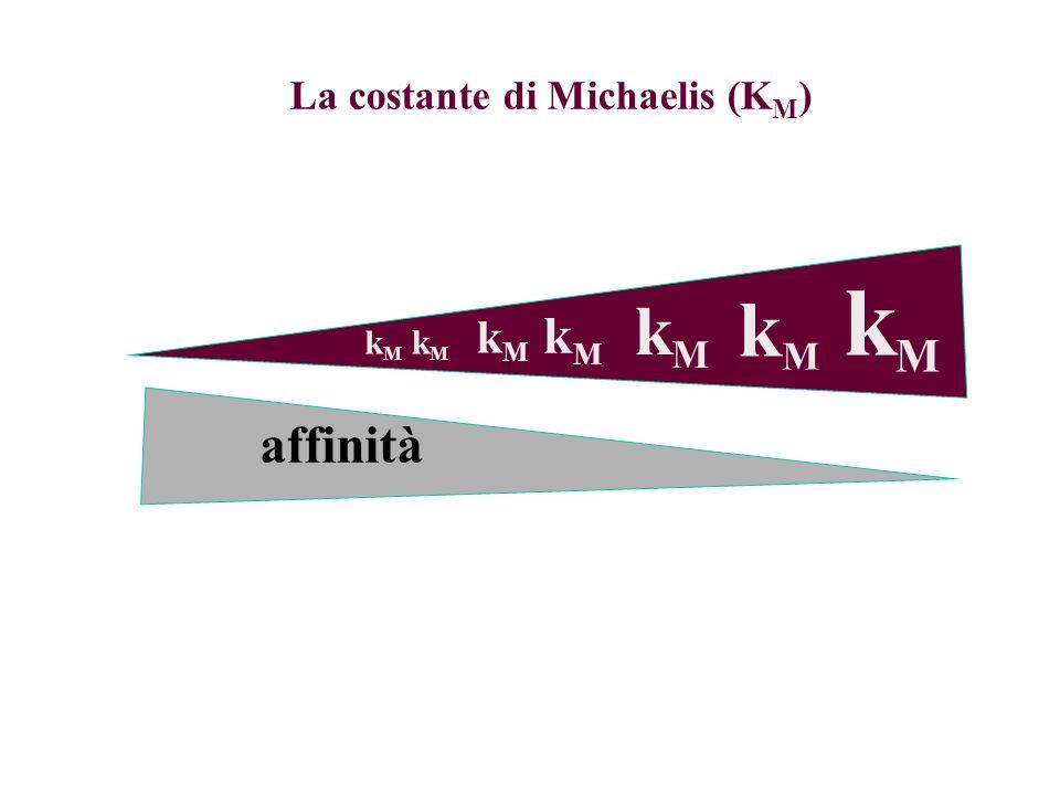 La costante di Michaelis (K M ) kMkM kMkM kMkM kMkM kMkM kMkM kMkM affinità