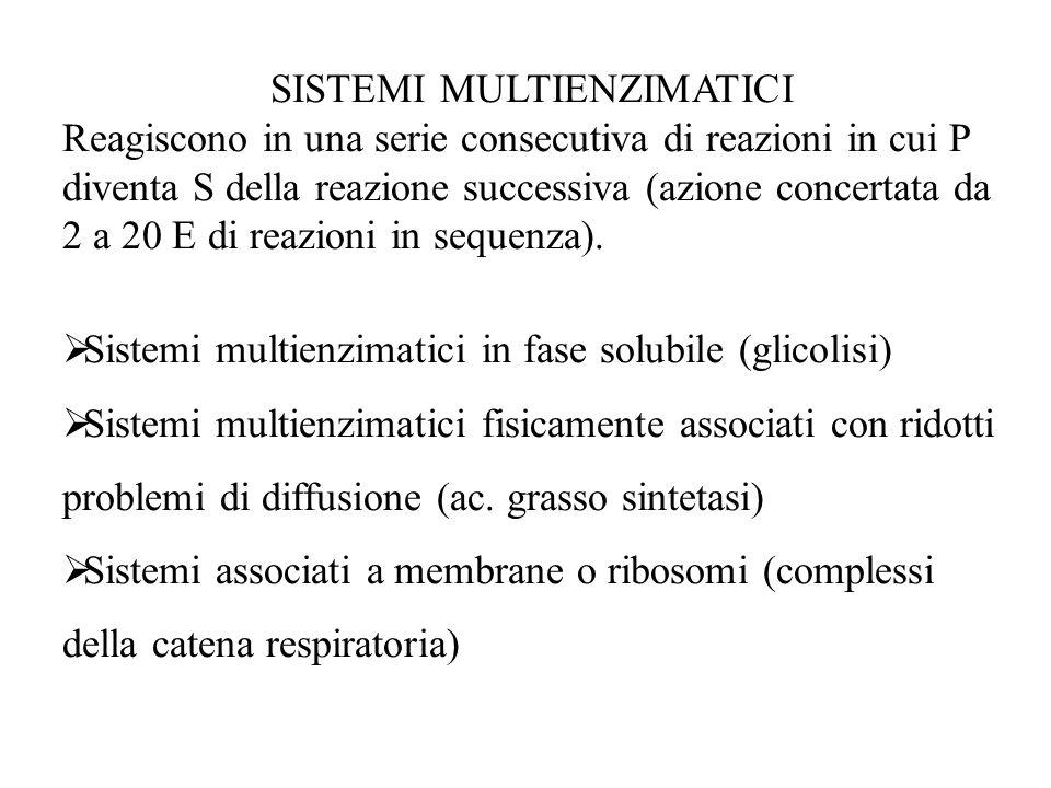 SISTEMI MULTIENZIMATICI Reagiscono in una serie consecutiva di reazioni in cui P diventa S della reazione successiva (azione concertata da 2 a 20 E di