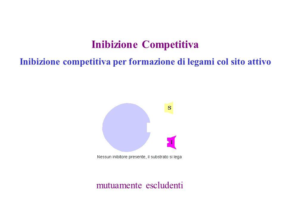Inibizione Competitiva Inibizione competitiva per formazione di legami col sito attivo mutuamente escludenti