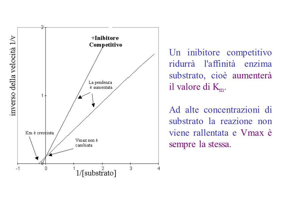Un inibitore competitivo ridurrà l'affinità enzima substrato, cioè aumenterà il valore di K m. Ad alte concentrazioni di substrato la reazione non vie