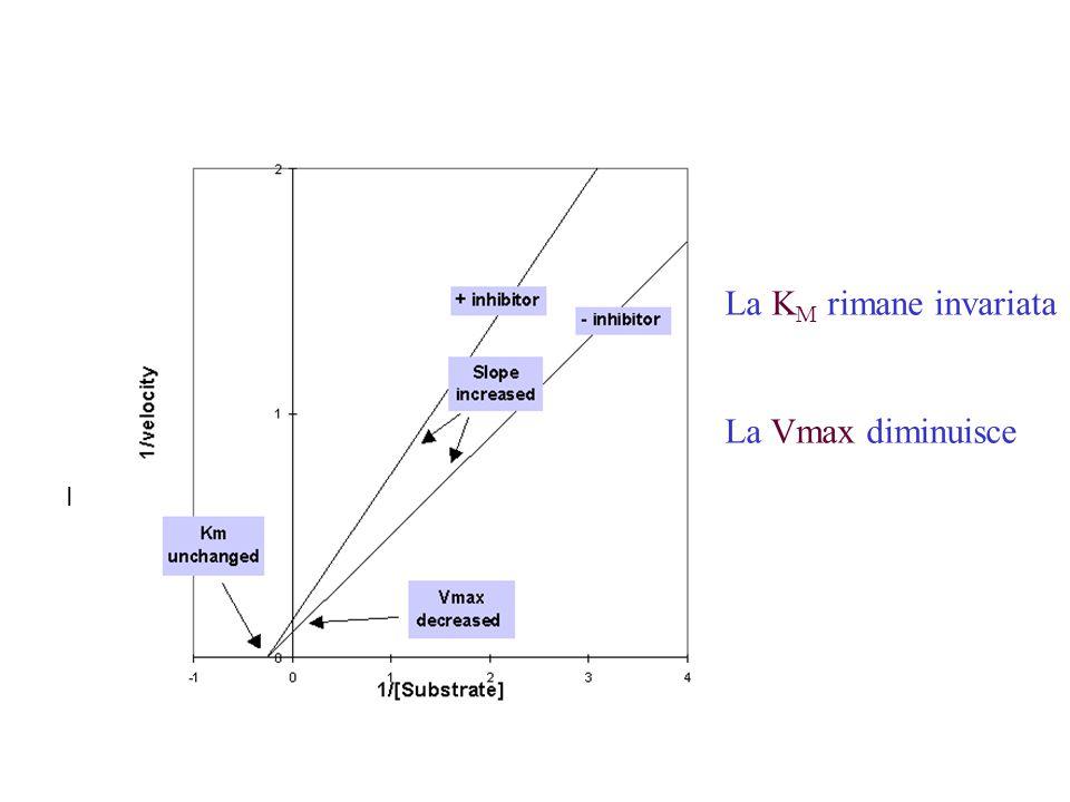 I La K M rimane invariata La Vmax diminuisce