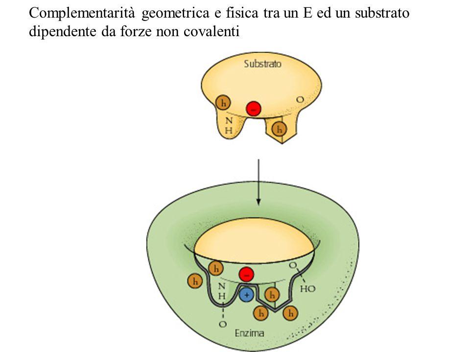 Complementarità geometrica e fisica tra un E ed un substrato dipendente da forze non covalenti