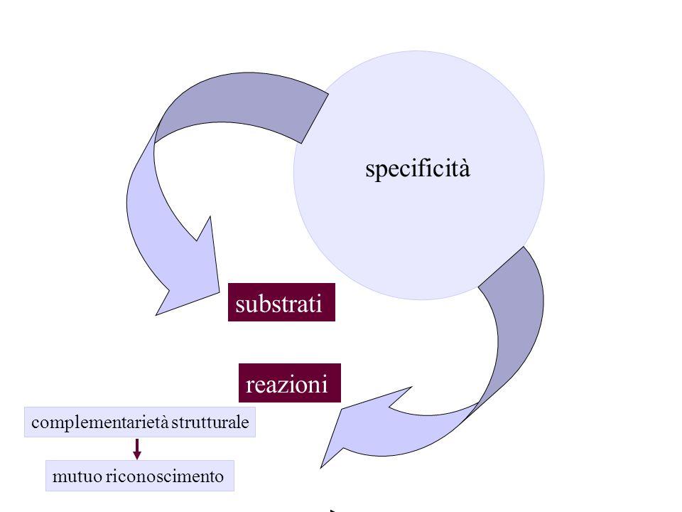 specificità reazioni substrati complementarietà strutturale mutuo riconoscimento
