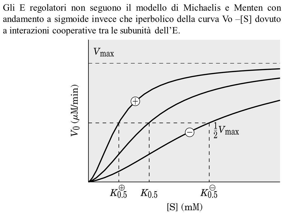 Gli E regolatori non seguono il modello di Michaelis e Menten con andamento a sigmoide invece che iperbolico della curva Vo –[S] dovuto a interazioni