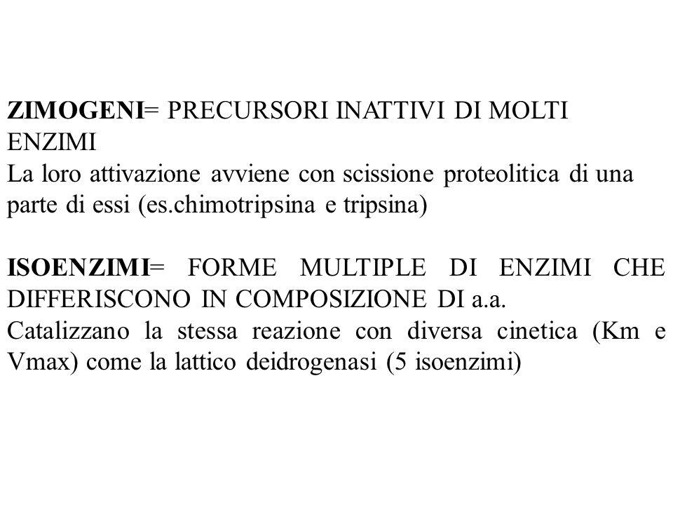 ZIMOGENI= PRECURSORI INATTIVI DI MOLTI ENZIMI La loro attivazione avviene con scissione proteolitica di una parte di essi (es.chimotripsina e tripsina
