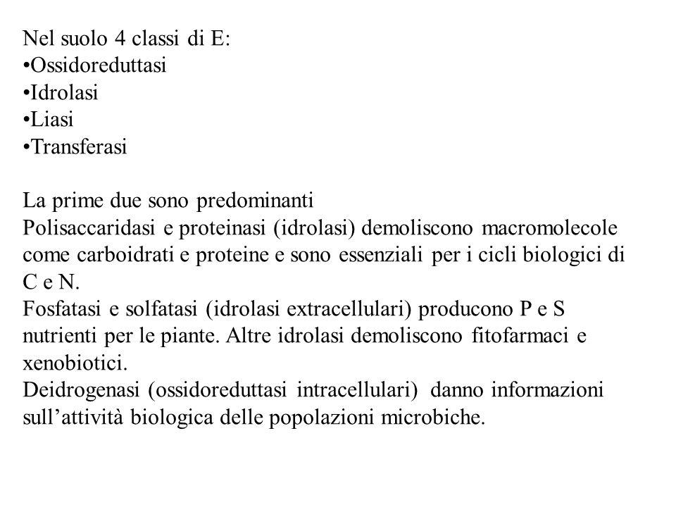 Nel suolo 4 classi di E: Ossidoreduttasi Idrolasi Liasi Transferasi La prime due sono predominanti Polisaccaridasi e proteinasi (idrolasi) demoliscono