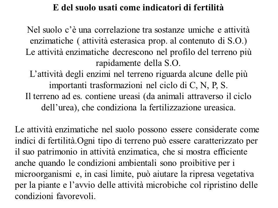 E del suolo usati come indicatori di fertilità Nel suolo c'è una correlazione tra sostanze umiche e attività enzimatiche ( attività esterasica prop. a