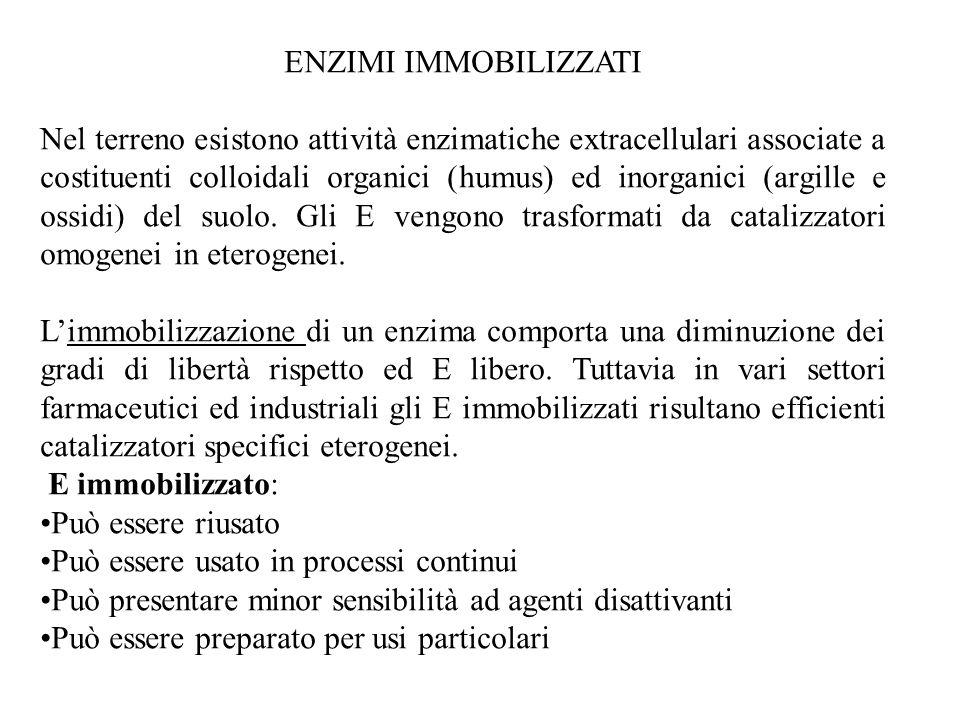 ENZIMI IMMOBILIZZATI Nel terreno esistono attività enzimatiche extracellulari associate a costituenti colloidali organici (humus) ed inorganici (argil