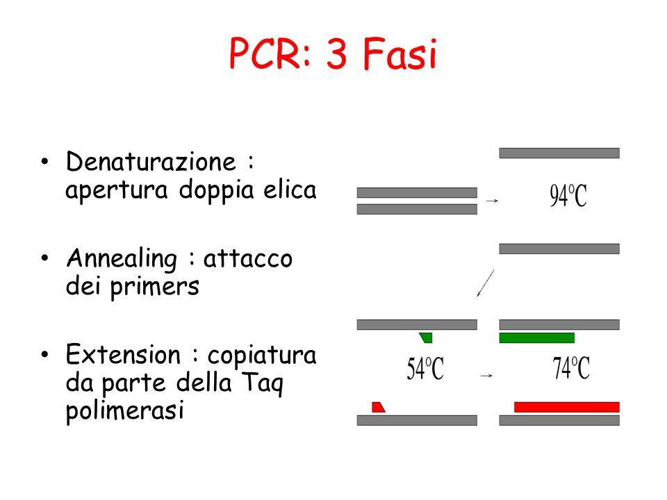 PCR: 3 Fasi Denaturazione : apertura doppia elica Annealing : attacco dei primers Extension : copiatura da parte della Taq polimerasi