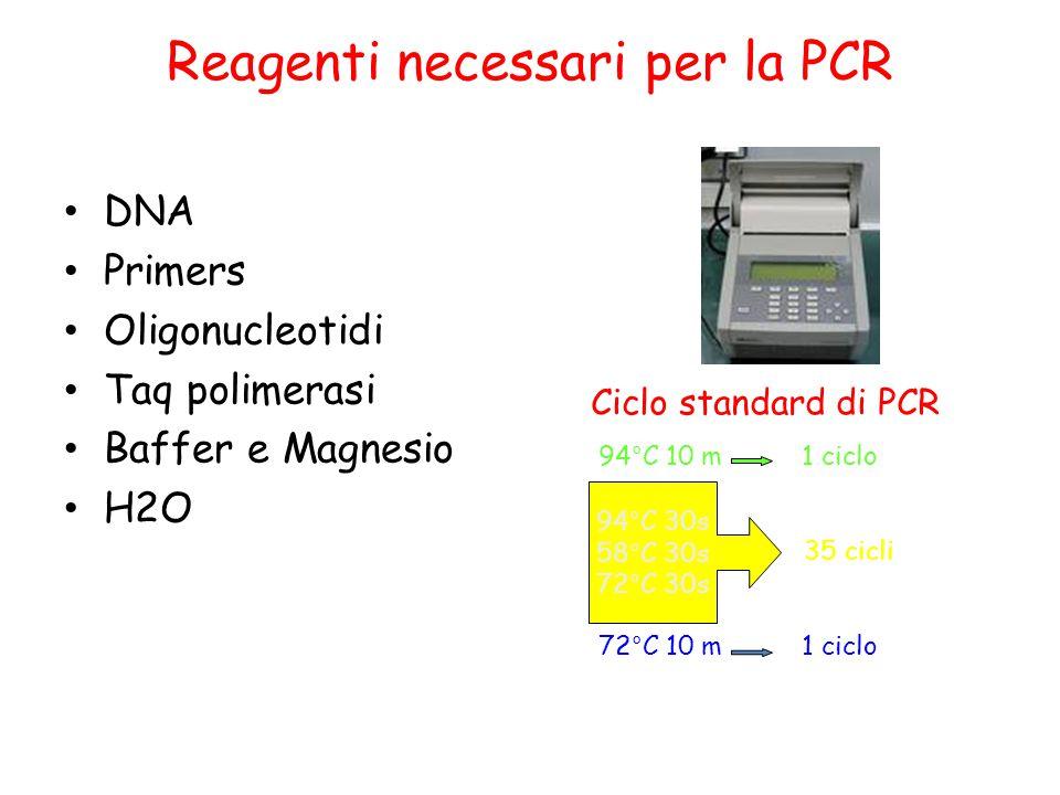 Reagenti necessari per la PCR DNA Primers Oligonucleotidi Taq polimerasi Baffer e Magnesio H2O Ciclo standard di PCR 94°C 10 m 1 ciclo 35 cicli 72°C 1
