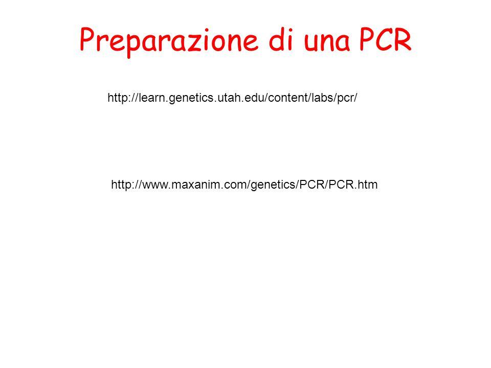 Preparazione di una PCR http://www.maxanim.com/genetics/PCR/PCR.htm http://learn.genetics.utah.edu/content/labs/pcr/
