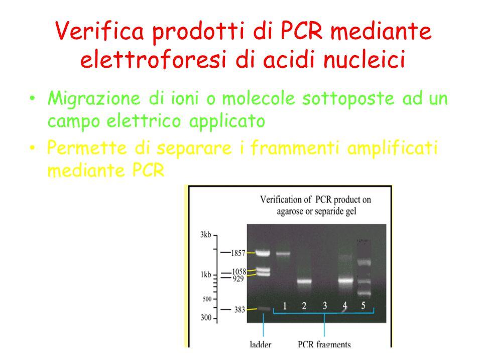 Verifica prodotti di PCR mediante elettroforesi di acidi nucleici Migrazione di ioni o molecole sottoposte ad un campo elettrico applicato Permette di