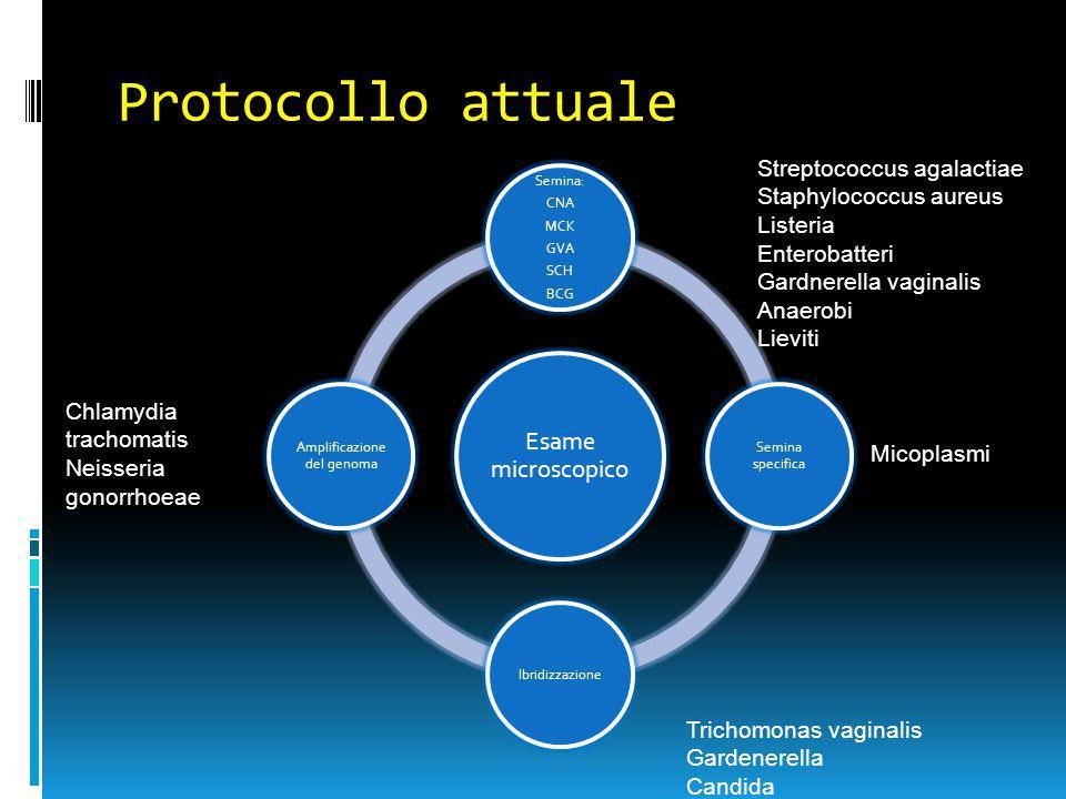Esame microscopico Striscio vaginale normale (flora lattobacillare) Clue cells (VB) Vaginite specifica o aerobica (AV)Vaginite da lieviti