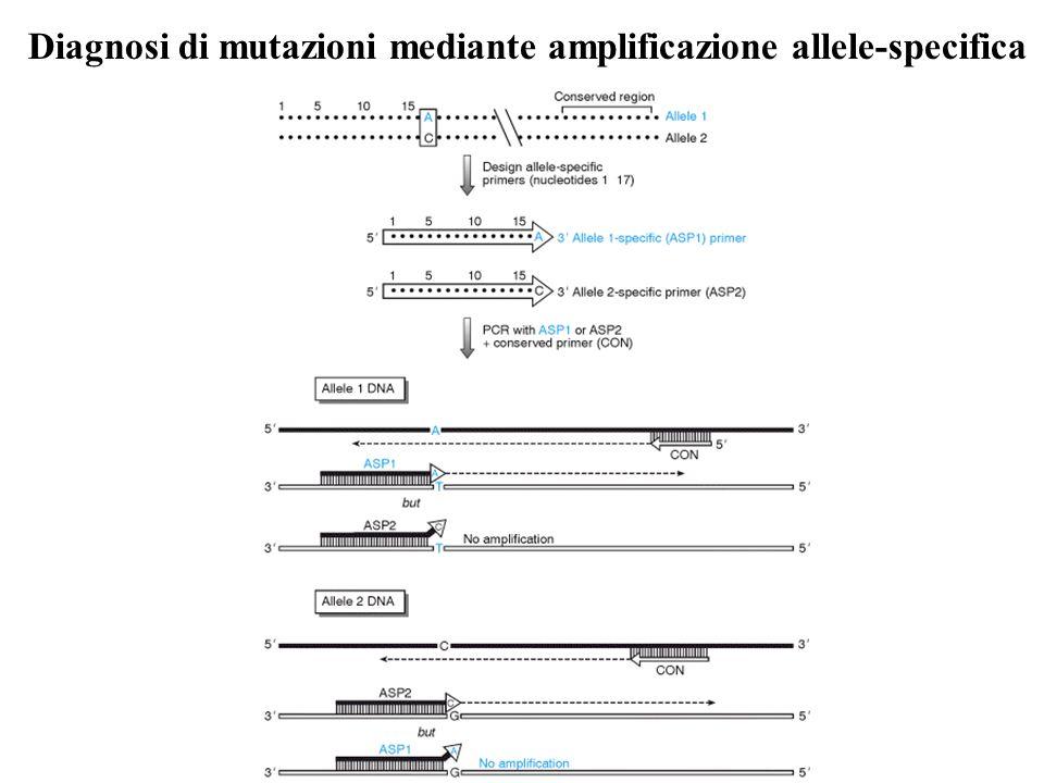 Diagnosi di mutazioni mediante amplificazione allele-specifica