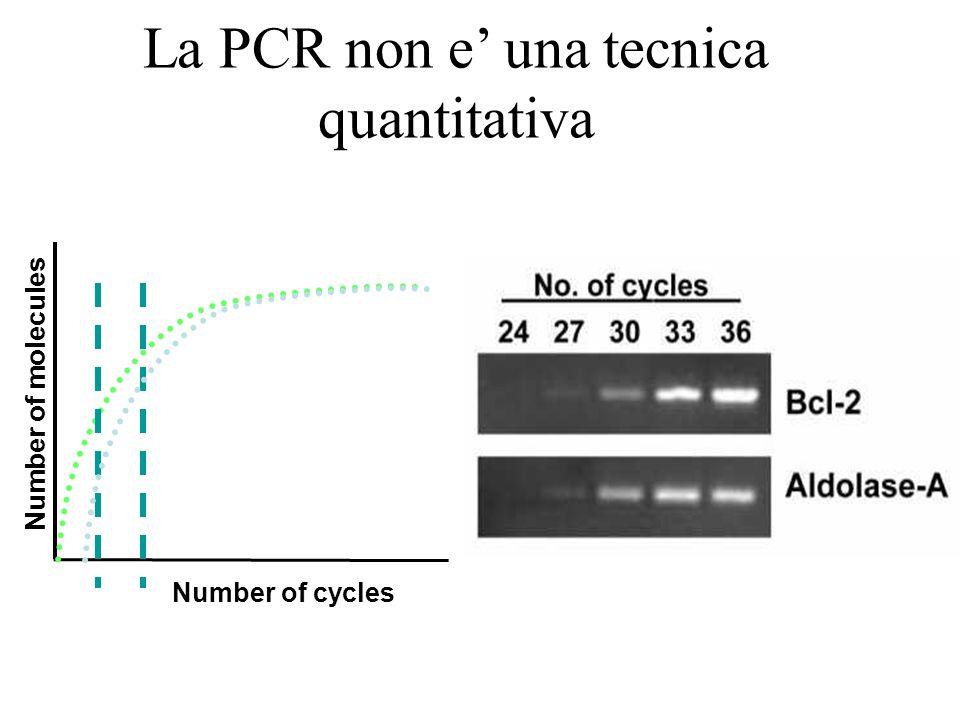 La PCR non e' una tecnica quantitativa Number of molecules Number of cycles