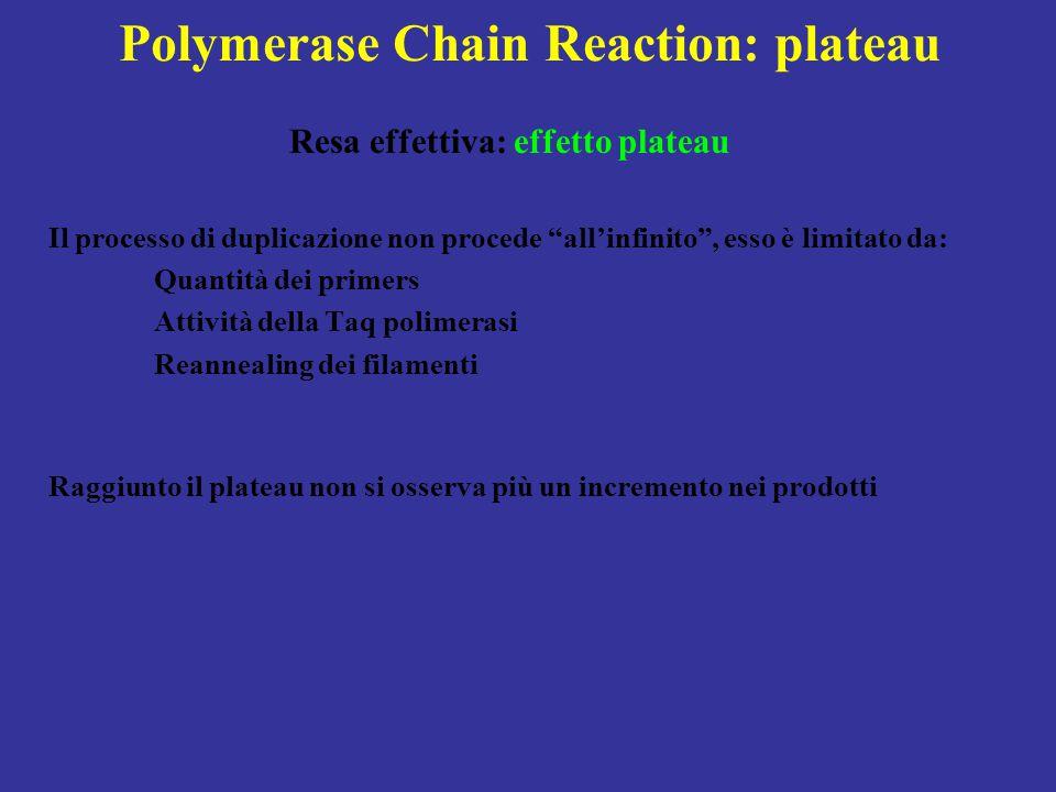 """Polymerase Chain Reaction: plateau Resa effettiva: effetto plateau Il processo di duplicazione non procede """"all'infinito"""", esso è limitato da: Quantit"""