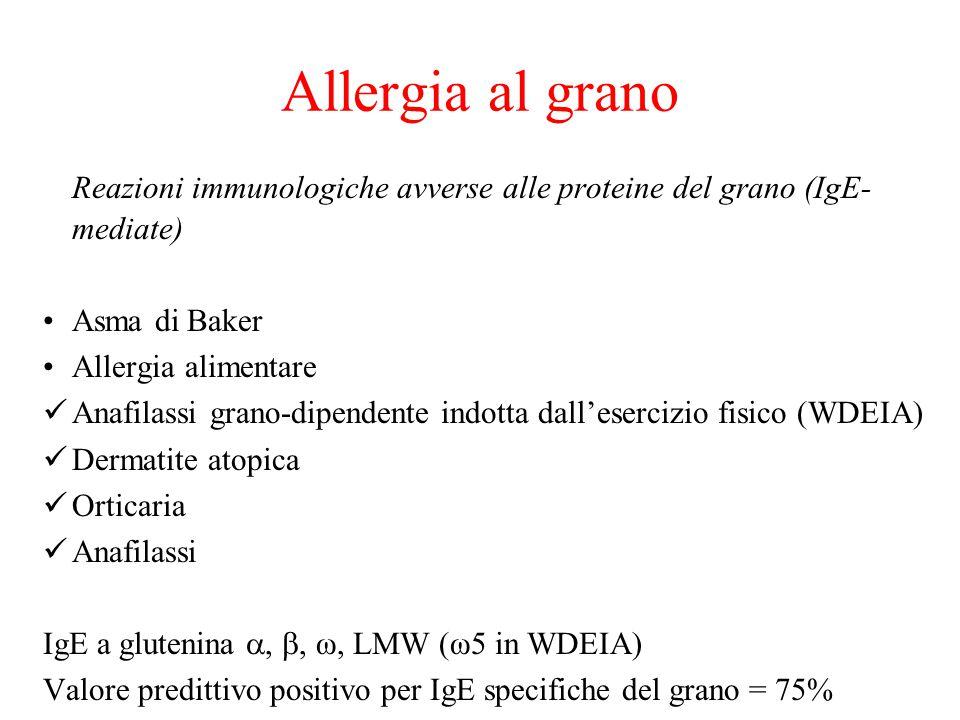 Allergia al grano Reazioni immunologiche avverse alle proteine del grano (IgE- mediate) Asma di Baker Allergia alimentare Anafilassi grano-dipendente