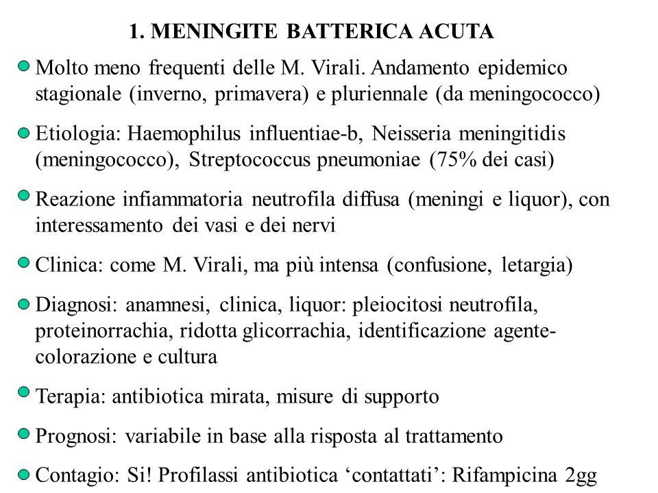 1. MENINGITE BATTERICA ACUTA Molto meno frequenti delle M. Virali. Andamento epidemico stagionale (inverno, primavera) e pluriennale (da meningococco)