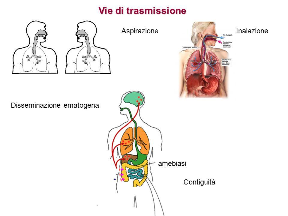 Vie di trasmissione InalazioneAspirazione Contiguità amebiasi Disseminazione ematogena