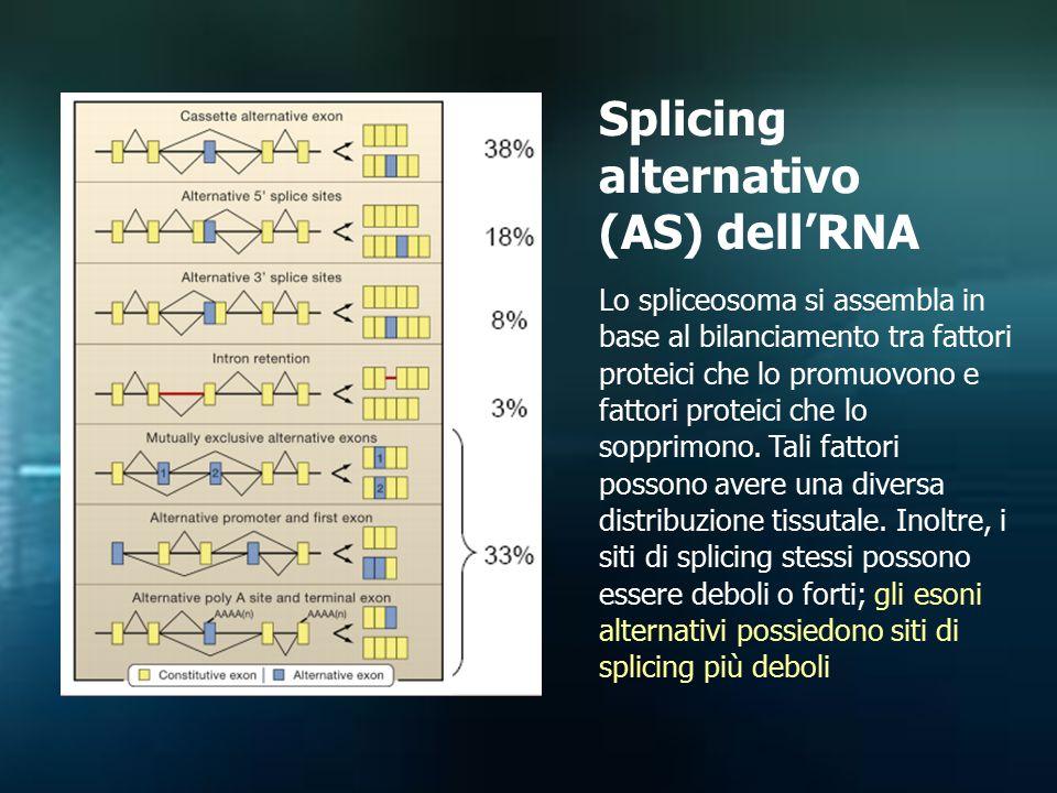 Splicing alternativo (AS) dell'RNA Lo spliceosoma si assembla in base al bilanciamento tra fattori proteici che lo promuovono e fattori proteici che l