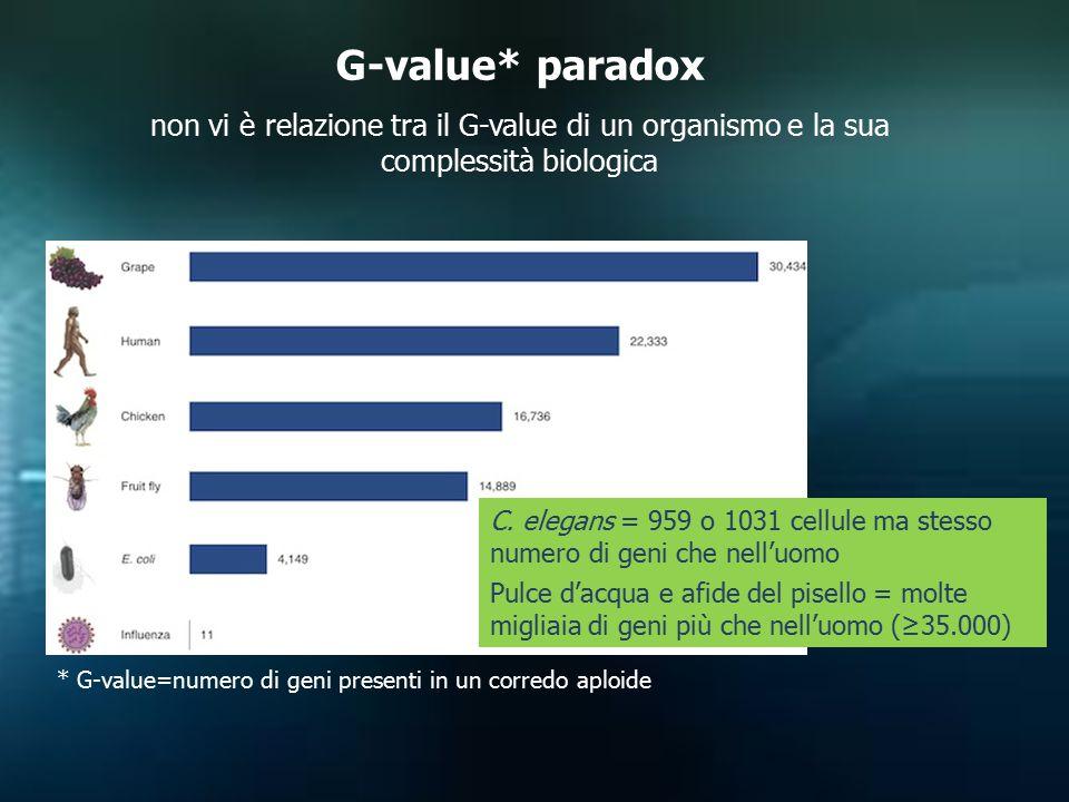 G-value* paradox non vi è relazione tra il G-value di un organismo e la sua complessità biologica * G-value=numero di geni presenti in un corredo aplo