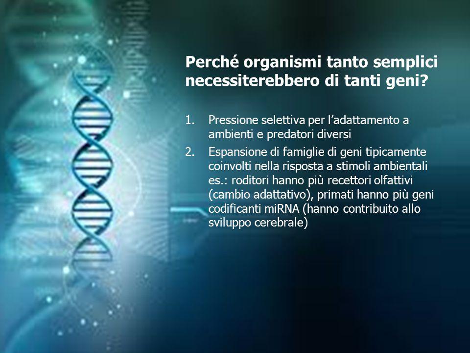 Perché organismi tanto semplici necessiterebbero di tanti geni? 1.Pressione selettiva per l'adattamento a ambienti e predatori diversi 2.Espansione di