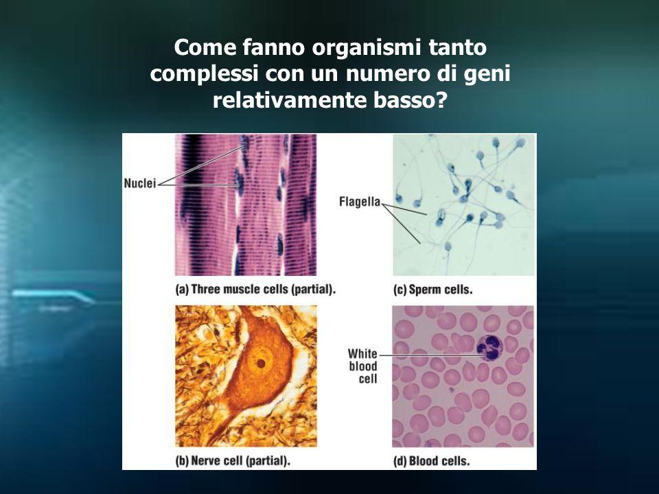 Come fanno organismi tanto complessi con un numero di geni relativamente basso?