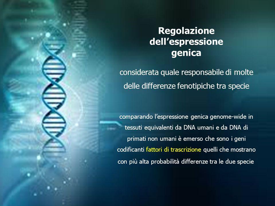 Regolazione dell'espressione genica considerata quale responsabile di molte delle differenze fenotipiche tra specie comparando l'espressione genica ge