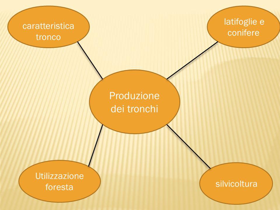 Produzione dei tronchi caratteristica tronco latifoglie e conifere Utilizzazione foresta silvicoltura