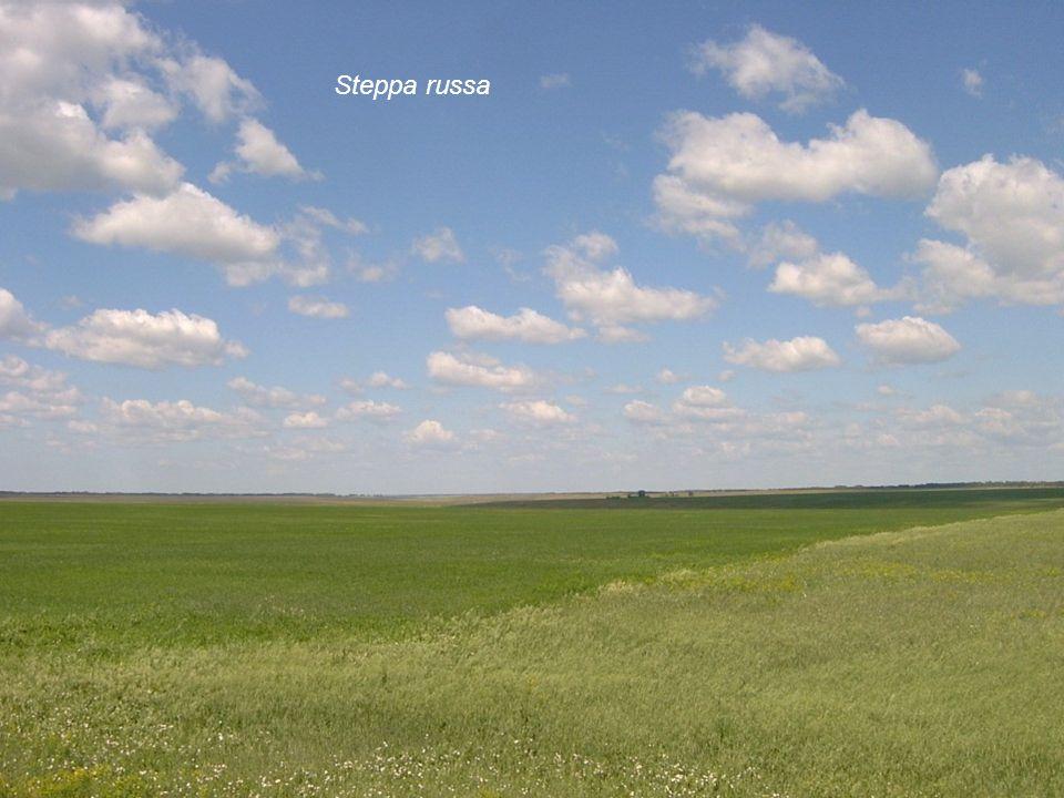 Steppa russa