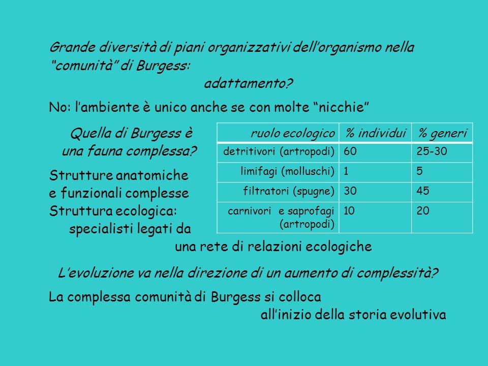 ruolo ecologico% individui% generi detritivori (artropodi)6025-30 limifagi (molluschi)15 filtratori (spugne)3045 carnivori e saprofagi (artropodi) 102
