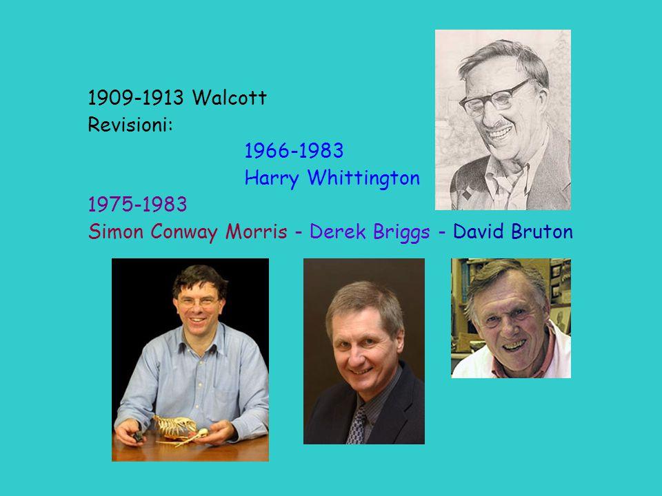 1909-1913 Walcott Revisioni: 1966-1983 Harry Whittington 1975-1983 Simon Conway Morris - Derek Briggs - David Bruton