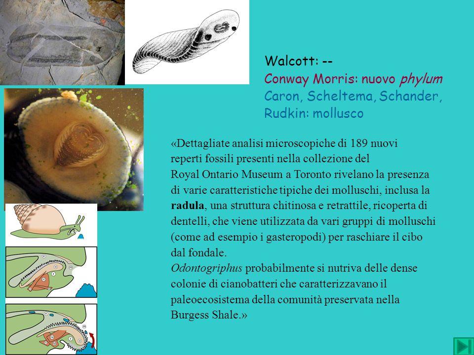 «Dettagliate analisi microscopiche di 189 nuovi reperti fossili presenti nella collezione del Royal Ontario Museum a Toronto rivelano la presenza di v