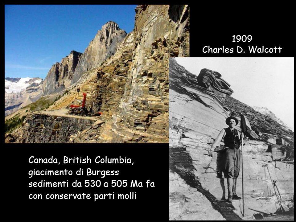 Canada, British Columbia, giacimento di Burgess sedimenti da 530 a 505 Ma fa con conservate parti molli 1909 Charles D. Walcott