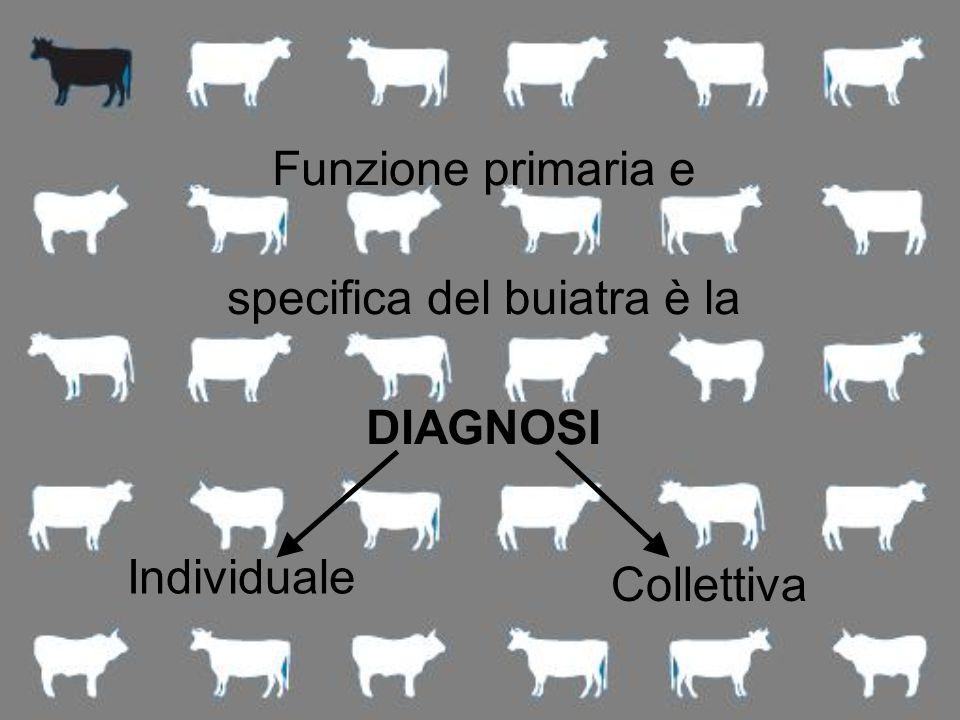 Funzione primaria e specifica del buiatra è la DIAGNOSI Individuale Collettiva