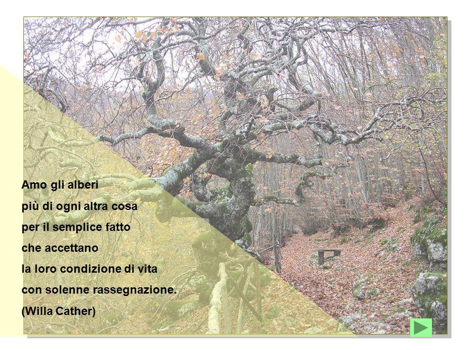 Amo gli alberi più di ogni altra cosa per il semplice fatto che accettano la loro condizione di vita con solenne rassegnazione. (Willa Cather)