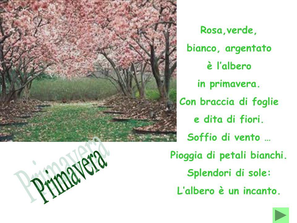Rosa,verde, bianco, argentato è l'albero in primavera. Con braccia di foglie e dita di fiori. Soffio di vento … Pioggia di petali bianchi. Splendori d