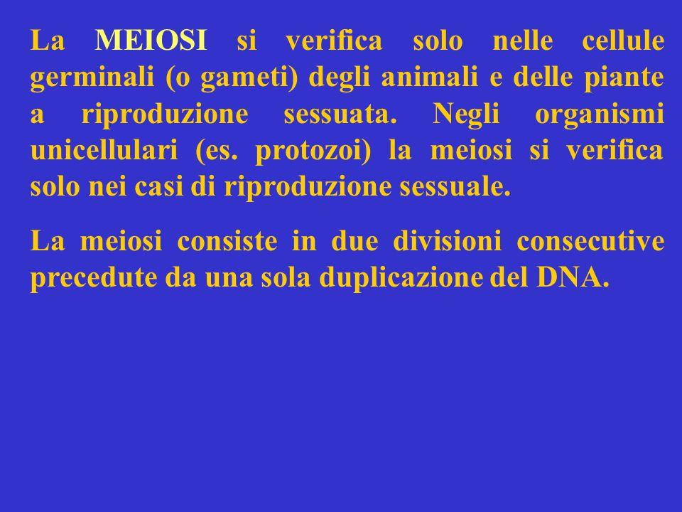 La MEIOSI si verifica solo nelle cellule germinali (o gameti) degli animali e delle piante a riproduzione sessuata.